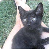 Adopt A Pet :: Gregor - Fresno, CA