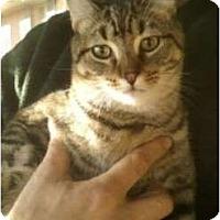 Adopt A Pet :: Carlisle - Troy, OH