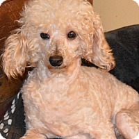 Adopt A Pet :: Clarisse - Prole, IA