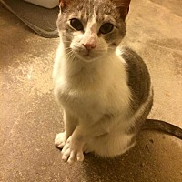 Adopt A Pet :: Lucy - Brentwood, NY