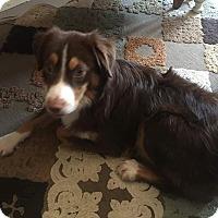Adopt A Pet :: Murphy - ROME, NY