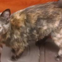 Adopt A Pet :: BoBo - Salisbury, NC