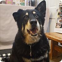 Adopt A Pet :: Angus - Fennville, MI