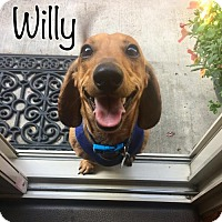 Adopt A Pet :: Willy - Los Angeles, CA