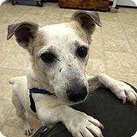 Adopt A Pet :: Jack - Belleville, MI