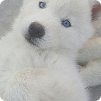 Adopt A Pet :: Marshmellow - Apple valley, CA