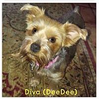 Adopt A Pet :: diva - Suwanee, GA