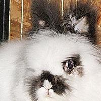 Adopt A Pet :: Timmee - Portland, ME