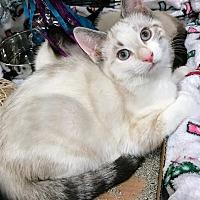 Adopt A Pet :: Isra - Lancaster, CA