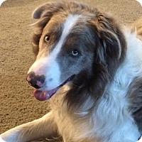 Adopt A Pet :: Spunky-fostered in St. Paul - Ada, MN