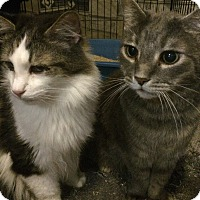 Adopt A Pet :: Diamond - Whittier, CA