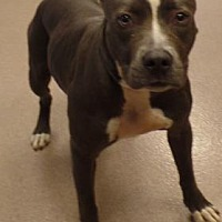 Adopt A Pet :: Lucinda - Decatur, GA