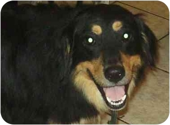 Australian Shepherd Mix Dog for adoption in Coudersport, Pennsylvania - BUB