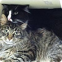 Adopt A Pet :: Shamrock - Riverhead, NY