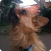 Adopt A Pet :: Catlina - Arlington, TX