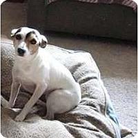 Adopt A Pet :: Mandy - Omaha, NE