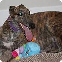 Adopt A Pet :: Drake - Knoxville, TN