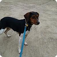Adopt A Pet :: Charity - Richmond, VA