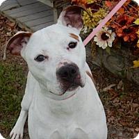 Adopt A Pet :: Natalie - Seattle, WA