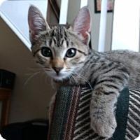 Adopt A Pet :: Mary Kate - Sedalia, MO