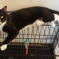 Adopt A Pet :: Two Dots - Parkton, NC