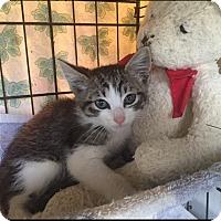 Adopt A Pet :: Elijah - Metairie, LA