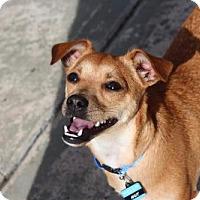 Adopt A Pet :: PeaNut - Princeton, MN
