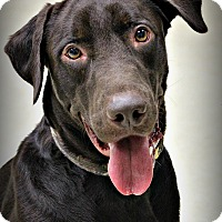 Adopt A Pet :: Phin - Dunkirk, NY