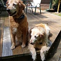 Adopt A Pet :: Killian - New Canaan, CT