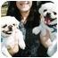 Photo 3 - Pekingese Mix Dog for adoption in Spring Valley, California - Gizmo & Gigi