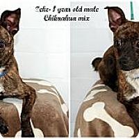 Adopt A Pet :: Zeke - Evansville, IN