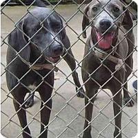 Adopt A Pet :: Bree & Anna - Eustis, FL