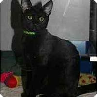 Adopt A Pet :: Lincoln - Marietta, GA