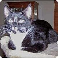 Adopt A Pet :: K-Princess2-Twix - Colorado Springs, CO