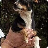 Adopt A Pet :: Tiny Tim - Plainfield, CT
