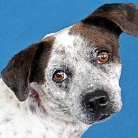 Adopt A Pet :: Oakley - Renfrew, PA