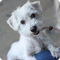 Adopt A Pet :: Toby - Canoga Park, CA