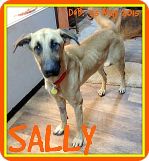 German Shepherd Dog Mix Dog for adoption in White River Junction, Vermont - SALLY