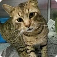 Adopt A Pet :: Milo-FeLV - Fort Smith, AR