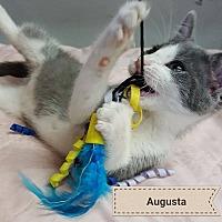 Adopt A Pet :: Augusta - Overland Park, KS
