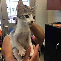 Adopt A Pet :: A438582 - San Antonio, TX