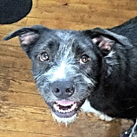 Adopt A Pet :: Roger - Fredericksburg, VA