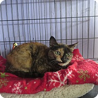 Adopt A Pet :: Gypsy - Coos Bay, OR