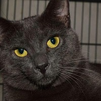 Adopt A Pet :: Armanie - Saginaw, MI