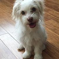 Adopt A Pet :: Giovanni - Atlanta, GA