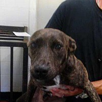 Adopt A Pet :: Luke - Waycross, GA