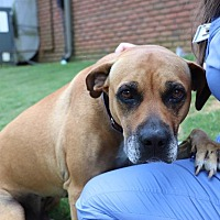 Adopt A Pet :: Buster - Knoxville, TN