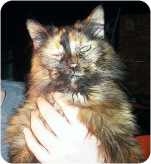 Calico Cat for adoption in Paintsville, Kentucky - Lucy