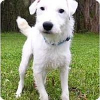 Adopt A Pet :: Tilly - Mocksville, NC