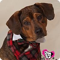 Adopt A Pet :: Frederick - Bradenton, FL